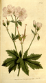 The Botanical Magazine, Plate 203 (Volume 6, 1793).png