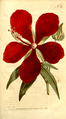 The Botanical Magazine, Plate 360 (Volume 10, 1796).png