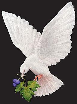 The Messenger dove scan copy
