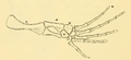 The Osteology of the Reptiles-202 kjhg kijuhb kijh fd uyhg vbn.png