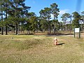 The Pines Golf Course, Decatur County.jpg