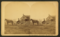 The buckboard, Bar Harbor, Mt. Desert, Me, by B. Bradley.png