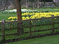 The glories of Spring at Snowshill Manor - geograph.org.uk - 1204595.jpg