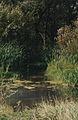 The river Iznair (Borki).jpg