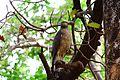 The serpant eagle.jpg