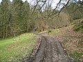 The track heading into the forest - geograph.org.uk - 1164800.jpg