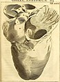 Theodori Kerckringii, Doctoris medici Opera omnia anatomica - continentia Specilegium anatomicum, Osteogeniam foetuum, nec non Anthropogeniae ichnographiam - accuratissimis figuris aeri incisis (14779291874).jpg