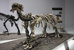 Tianzhenosaurus youngi