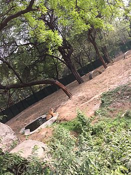 Tiger in pond.jpg