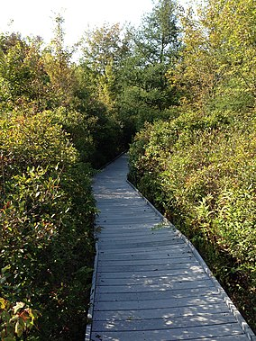 Tom S. Cooperrider-Kent Bog State Nature Preserve boardwalk.jpg