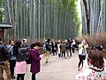 Tourists at the bamboo forest in Kyoto 1.jpg