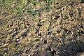 Tracks in the mud - geograph.org.uk - 386246.jpg