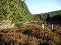 Traquair Forest - geograph.org.uk - 295270.jpg