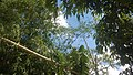 Tre - panoramio.jpg
