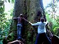 Tree Huggers at Huon Bush Retreats, Mount Misery, Huon Valley, Tasmania.jpg