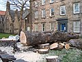Tree felled, Palace Street East, Berwick upon Tweed - geograph.org.uk - 1220836.jpg
