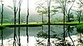 Tree reflection with natural beauty.jpg