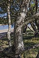 Tree trunk, Vézoles Lake 01.jpg