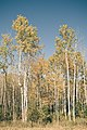 Trees, Moose Lake, MN (30664950636).jpg