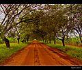 Trees Of Heaven - panoramio.jpg