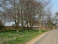 Trees and daffodils - geograph.org.uk - 380276.jpg