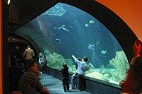 Tunnel aquarium trocadero.jpg