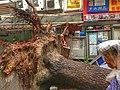 Typhoon Mangkhut, nature disaster, Tai Po, Hong Kong (49903227066).jpg
