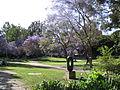 UCLA Sculpture Garden.jpg