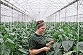 UFV - Agriculture Students Work Practicum (13994024161).jpg