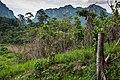 USAID Measuring Impact Conservation Enterprise Retrospective (Philippines; Nagkakaisang Tribu ng Palawan) (38483434380).jpg