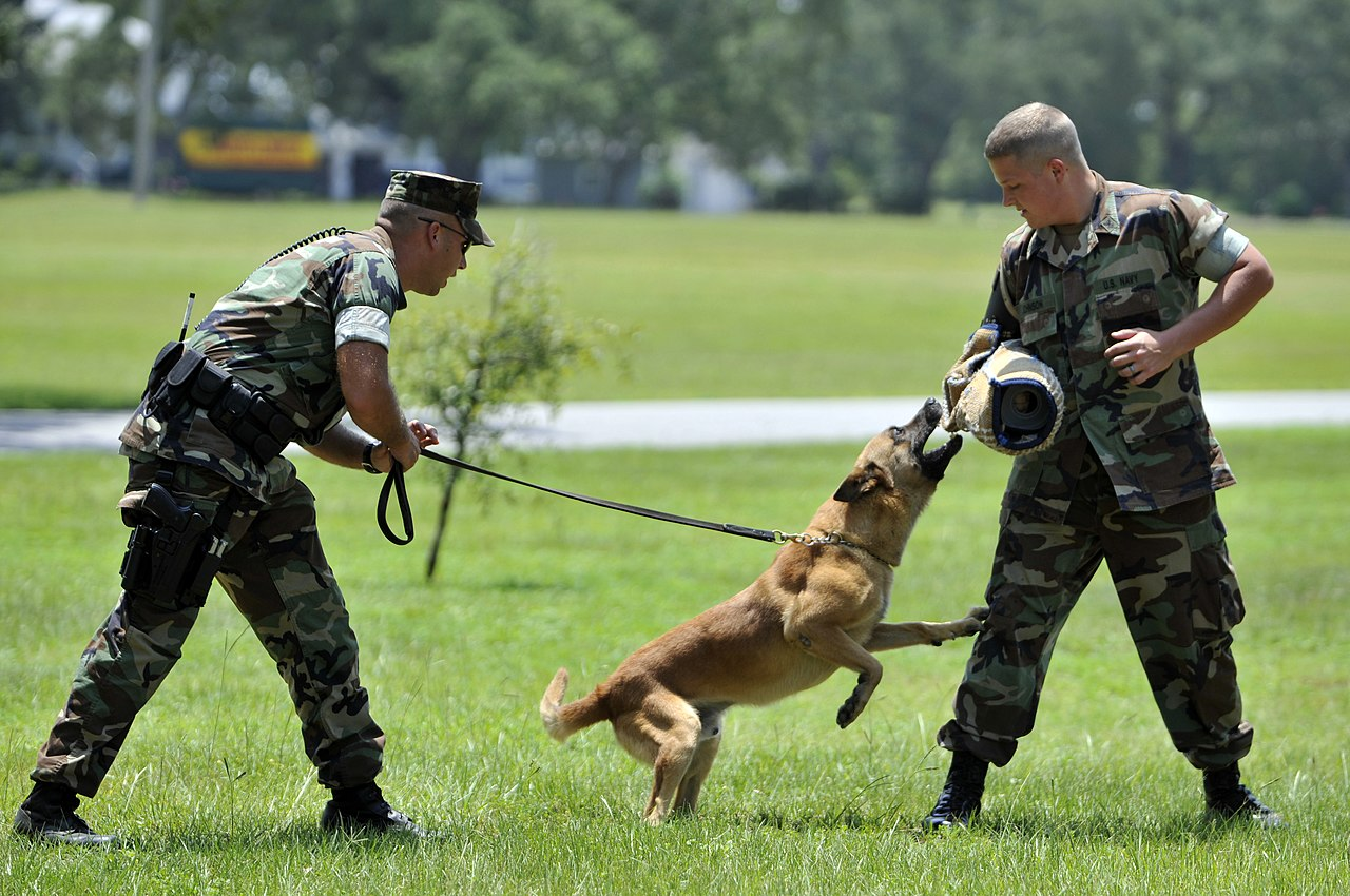Schutzhund Dog Training Equipment Uk