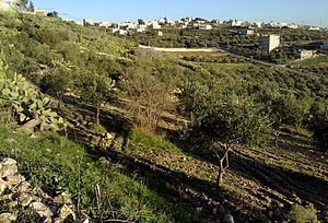 Hauran - The village of Johfiyeh in the Jordanian part of Hauran