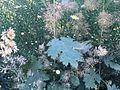 Unbekannte Pflanze aus Süddeutschland 02.jpg