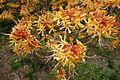 Unidentified - Morris Arboretum - DSC00304.JPG