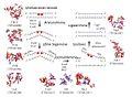 Uvr-valkude poolt teostatud nukleotiidide väljalõikereparatsioon.jpg