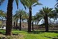 VIEW , ®'s - DiDi - RM - Ð 6K - ┼ , MADRID PARQUE de PEÑUELAS JARDÍN - panoramio (161).jpg