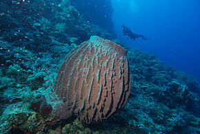 Description de l'image Vaaspons.jpg.