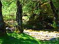 Val Fondillo in verde.jpg