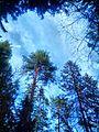 Valdaysky District, Novgorod Oblast, Russia - panoramio (3468).jpg