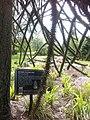 Van dusen botanical garden may 2012 - panoramio.jpg