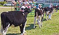 Vankleek Hill Agricultural Fair (9733675304).jpg