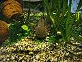 Vannes - aquarium (22).jpg