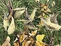 Vegetation at the National Arboretum.jpg