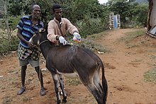 Veterinary Outreach Hawaye Kebele Ethiopia.jpg
