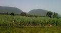 View near Elamanchili town 01.jpg