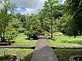 Vue du jardin médicinal dans le Jardin de Pamplemousses (mars 2020).jpg
