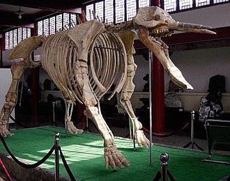 Platybelodon - Image: WP Hubei Platybeladon