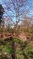 Waldlehrpfad Schönert 06.jpg