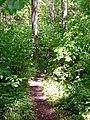Wanderweg im Naturpark Schönbuch bei Mauren - panoramio.jpg