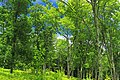 West Branch Research and Demonstration Forest (12) (28059780316).jpg